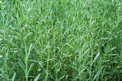 Herbs garden Stock Image