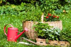 Herbs in a garden Stock Photography