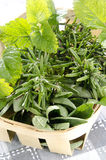 Herbs from the garden in a basket Stock Photo