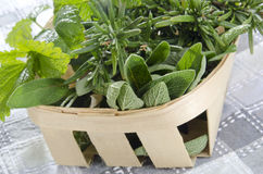 Herbs from the garden in a basket stock photos