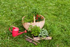 Herbs in a garden Royalty Free Stock Images