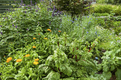 Herbs garden. Image of herbs garden in a summer royalty free stock photos
