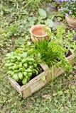 Herbs from the garden Stock Photos