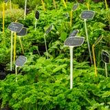 Herbs on a german market stock photo
