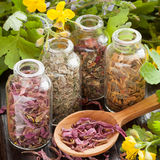 Herbs in glass bottles, dried healthy plants in wooden spoon Royalty Free Stock Images
