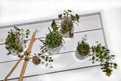 Herbs in Glasses on White Tray. Various Herbs in Glasses on White Tray with Snail Shell and Wooden Picks Stock Photo