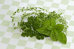 Herbs on Green Checkered Background Royalty Free Stock Photos