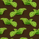 Herbs. Green herbs growing on the ground vector illustration
