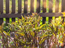 Herbs growing in the garden royalty free stock image