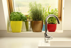 Herbs growing in kitchen Royalty Free Stock Photography