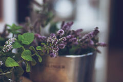 Herbs. Growing in pots on a table Royalty Free Stock Image