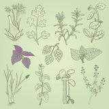 Herbs hand drawn. Hand drawn doodle herbs illustration Stock Photo