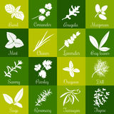 Herbs hand drawn vector big icon squared set Stock Photography