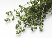 Herbs handful. Handful of fresh herbs and natural food seasoning Stock Image
