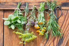 Free Herbs Hang And Dry Stock Image - 122057231