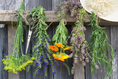 Herbs hang and dry. Herbs dill, hyssop, calendula, thyme, tarragon hang and dry royalty free stock photos