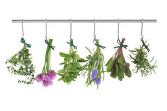 Herbs Hanging And Drying Stock Image