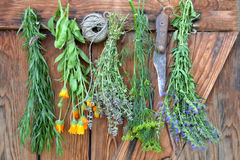 Herbs Hanging and Drying.  royalty free stock photography