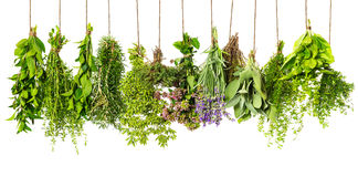 Herbs hanging isolated on white. food ingredients Stock Photos
