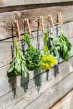 Herbs hanging over wooden background Royalty Free Stock Image