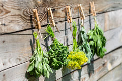 Herbs hanging over wooden background Royalty Free Stock Images