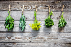 Herbs hanging over wooden background Stock Photography