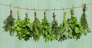 Herbs hanging from rope. A set of green herbs hanging from a rope royalty free stock images