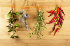 Herbs hanging on to dry Stock Image