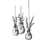 Herbs In Hanging Vases Ink Drawing Stock Photos