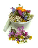 Herbs Royalty Free Stock Image