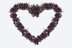 Herbs heart stock images