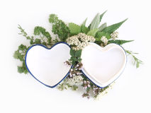 Herbs and hearts background Stock Image