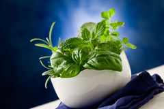 Herbs highlighted by spot light Stock Photo