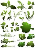 Set herbs for home canning and the manufacture of medical products. Royalty Free Stock Photography