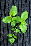 herbs Hortelã, manjericão e salsa fotografia de stock royalty free