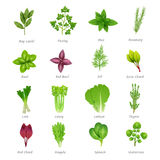 Herbs Icons Set. Icons set of different special herbs wich using in cooking with titles realistic isolated vector illustration Stock Photos