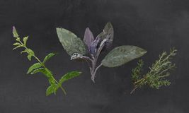 Herbs Illustrated with Chalk on Blackboard Royalty Free Illustration