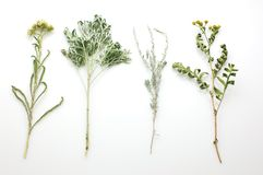 Herbs isolated Stock Photos