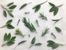 Sage, Rosemary, Thyme and Tarragon leaves isolated on white royalty free stock image