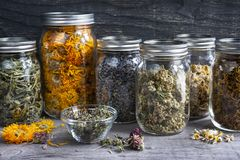 Herbs in jars royalty free stock image