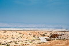 Herbs in Judaean Desert Royalty Free Stock Images