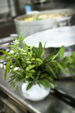 Herbs in the kitchen Royalty Free Stock Photo