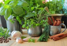 Herbs in the kitchen Stock Photo