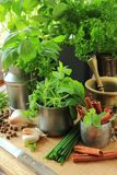 Herbs in the kitchen Stock Image