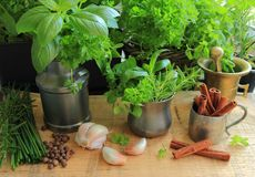 Herbs in the kitchen Stock Photography