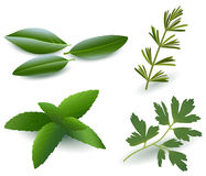 Herbs ( Laurel , Rosemary,Mint, Parsley ) Stock Photos