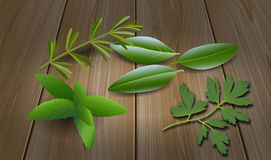 Herbs ( Laurel , Rosemary,Mint, Parsley ) Royalty Free Stock Image