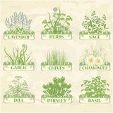 Herbs. Lavender chamomile chives garlic parsley dill sage and basil, herbal vintage background Royalty Free Stock Photos