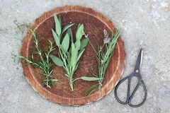 Herbs. Lavender, rosemary and sage Stock Photography