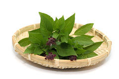 Herbs leaf. Herbs-Basil leaf on the basket isolated in whitebackground Stock Photography